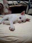 20050816-cat1_Ahtm