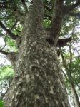 鷹取山の木