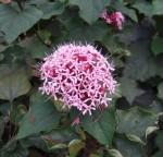 近所に咲いてた花