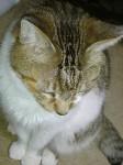 意外と広い猫の額